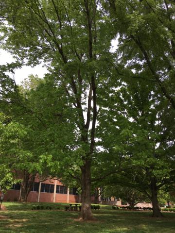 Image http://bioimages.vanderbilt.edu/lq/phoebusp/wfrpe03.JPG