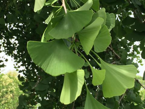 Image http://bioimages.vanderbilt.edu/lq/phoebusp/wgibi01.JPG