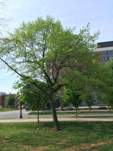Image http://bioimages.vanderbilt.edu/lq/phoebusp/wnysy01.JPG