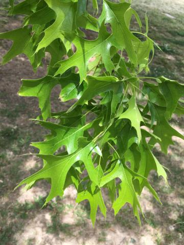 Image http://bioimages.vanderbilt.edu/lq/phoebusp/wqupa02.JPG