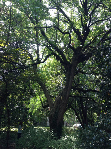 Image http://bioimages.vanderbilt.edu/lq/ssmv/w2-1006-03.jpg