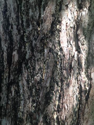 Image http://bioimages.vanderbilt.edu/lq/ssmv/w2-185-02.jpg