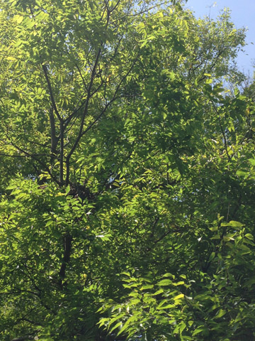 Image http://bioimages.vanderbilt.edu/lq/ssmv/w2-253-04.jpg