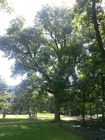 Image http://bioimages.vanderbilt.edu/lq/ssmv/w2-638-02.jpg