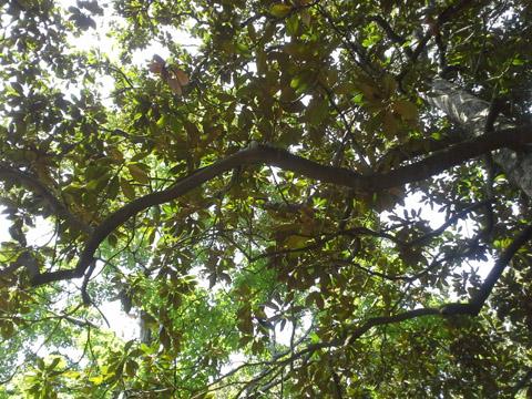 Image http://bioimages.vanderbilt.edu/lq/ssmv/w2-791-03.jpg