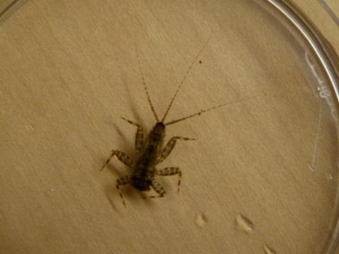Image http://bioimages.vanderbilt.edu/lq/streamteam/wstreamteam01001.JPG