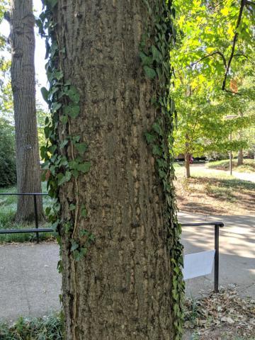 Image http://bioimages.vanderbilt.edu/lq/sullivanc/w20190918_152655.jpg