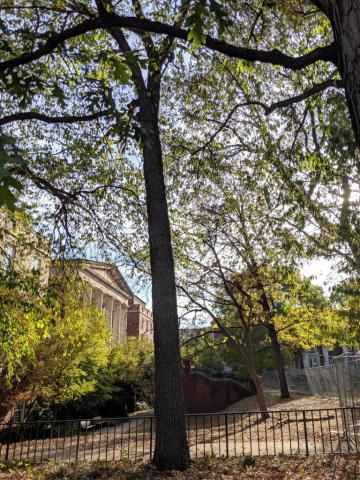 Image http://bioimages.vanderbilt.edu/lq/sullivanc/w20191004_084613.jpg