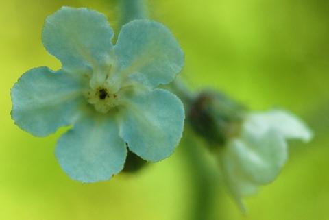 Image http://bioimages.vanderbilt.edu/lq/thomas/w0009-01-02.jpg