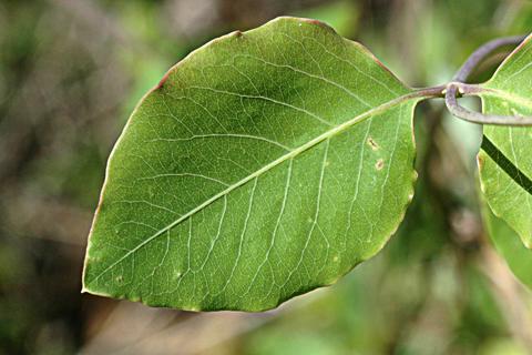 Image http://bioimages.vanderbilt.edu/lq/thomas/w0010-01-03.jpg