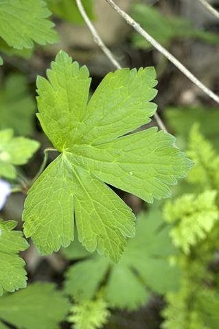 Image http://bioimages.vanderbilt.edu/lq/thomas/w0012-01-04.jpg