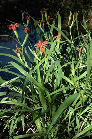 Image http://bioimages.vanderbilt.edu/lq/thomas/w0031-00-01.jpg