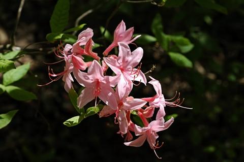 Image http://bioimages.vanderbilt.edu/lq/thomas/w0032-01-05.jpg