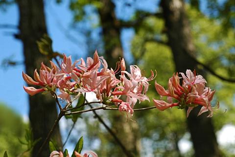 Image http://bioimages.vanderbilt.edu/lq/thomas/w0032-01-07.jpg