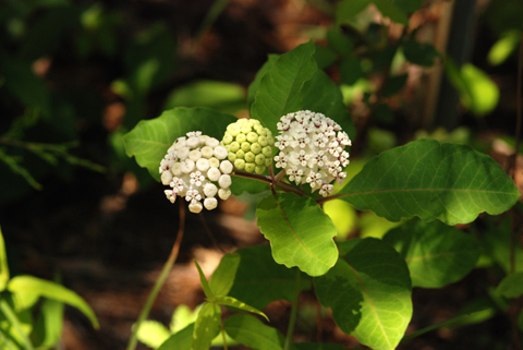 Image http://bioimages.vanderbilt.edu/lq/thomas/w0061-01-04.jpg
