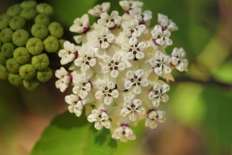Image http://bioimages.vanderbilt.edu/lq/thomas/w0061-01-05.jpg