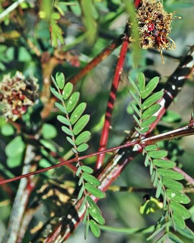 Image http://bioimages.vanderbilt.edu/lq/thomas/w0062-00-04.jpg