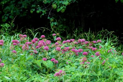 Image http://bioimages.vanderbilt.edu/lq/thomas/w0067-01-01.jpg