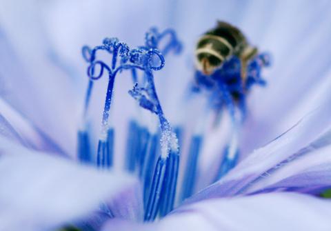Image http://bioimages.vanderbilt.edu/lq/thomas/w0083-01-05.jpg