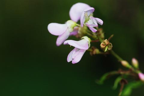 Image http://bioimages.vanderbilt.edu/lq/thomas/w0087-03-02.jpg