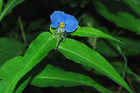 Image http://bioimages.vanderbilt.edu/lq/thomas/w0089-01-05.jpg