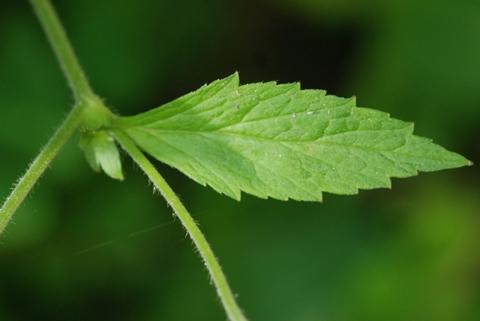 Image http://bioimages.vanderbilt.edu/lq/thomas/w0095-01-02.jpg