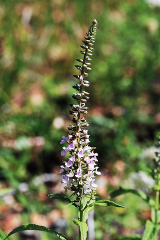 Image http://bioimages.vanderbilt.edu/lq/thomas/w0100-01-01.jpg