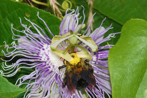 Image http://bioimages.vanderbilt.edu/lq/thomas/w0106-01-07.jpg
