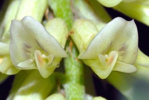 Image http://bioimages.vanderbilt.edu/lq/thomas/w0111-01-02.jpg