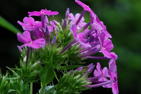 Image http://bioimages.vanderbilt.edu/lq/thomas/w0116-01-05.jpg