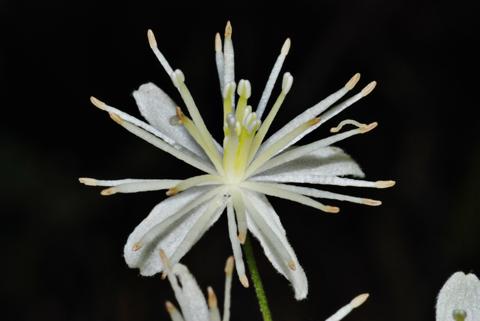Image http://bioimages.vanderbilt.edu/lq/thomas/w0122-01-03.jpg