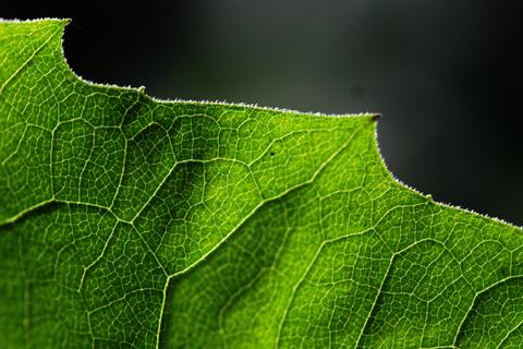 Image http://bioimages.vanderbilt.edu/lq/thomas/w0124-02-04.jpg