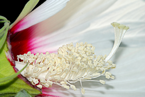 Image http://bioimages.vanderbilt.edu/lq/thomas/w0126-00-11.jpg