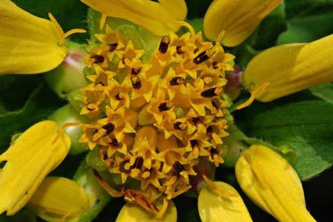 Image http://bioimages.vanderbilt.edu/lq/thomas/w0128-01-10.jpg