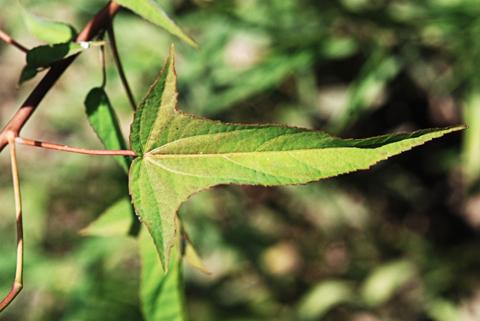 Image http://bioimages.vanderbilt.edu/lq/thomas/w0130-01-02.jpg