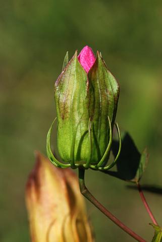 Image http://bioimages.vanderbilt.edu/lq/thomas/w0130-01-06.jpg