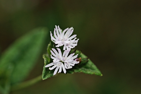 Image http://bioimages.vanderbilt.edu/lq/thomas/w0137-01-01.jpg