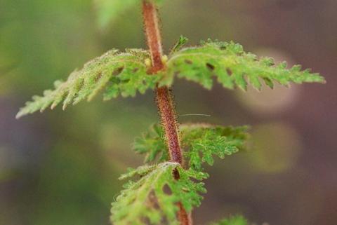 Image http://bioimages.vanderbilt.edu/lq/thomas/w0139-02-04.jpg