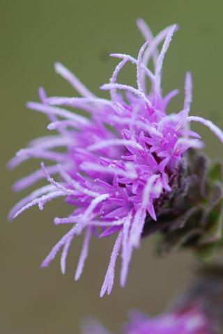 Image http://bioimages.vanderbilt.edu/lq/thomas/w0139-03-04.jpg