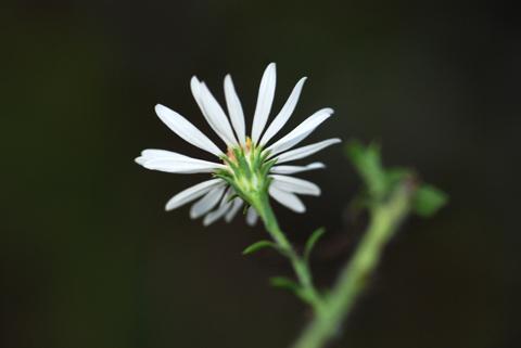 Image http://bioimages.vanderbilt.edu/lq/thomas/w0140-02-03.jpg