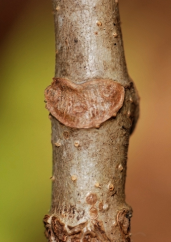 Image http://bioimages.vanderbilt.edu/lq/thomas/w0141-01-02.jpg
