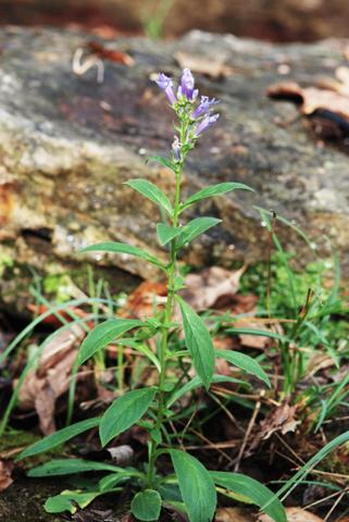 Image http://bioimages.vanderbilt.edu/lq/thomas/w0142-01-06.jpg
