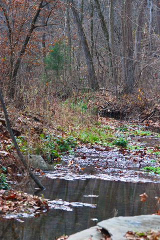 Image http://bioimages.vanderbilt.edu/lq/thomas/w0142-01-07.jpg