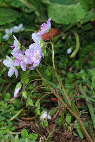 Image http://bioimages.vanderbilt.edu/lq/thomas/w0151-03-02.jpg