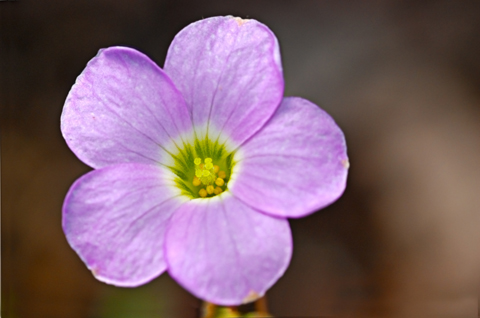 Image http://bioimages.vanderbilt.edu/lq/thomas/w0155-02-02.jpg