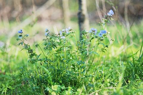 Image http://bioimages.vanderbilt.edu/lq/thomas/w0157-01-05.jpg