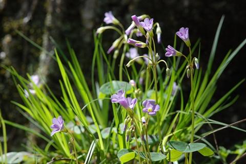 Image http://bioimages.vanderbilt.edu/lq/thomas/w0158-02-01.jpg