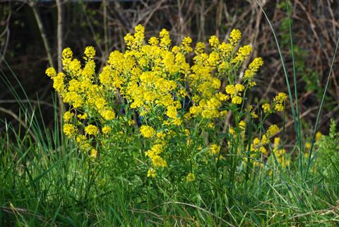 Image http://bioimages.vanderbilt.edu/lq/thomas/w0161-02-01.jpg