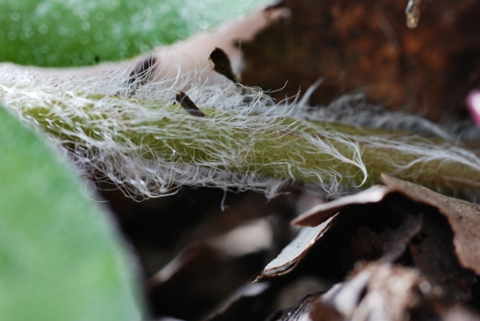 Image http://bioimages.vanderbilt.edu/lq/thomas/w0163-03-02.jpg
