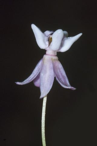 Image http://bioimages.vanderbilt.edu/lq/thomas/w0169-01-03.jpg